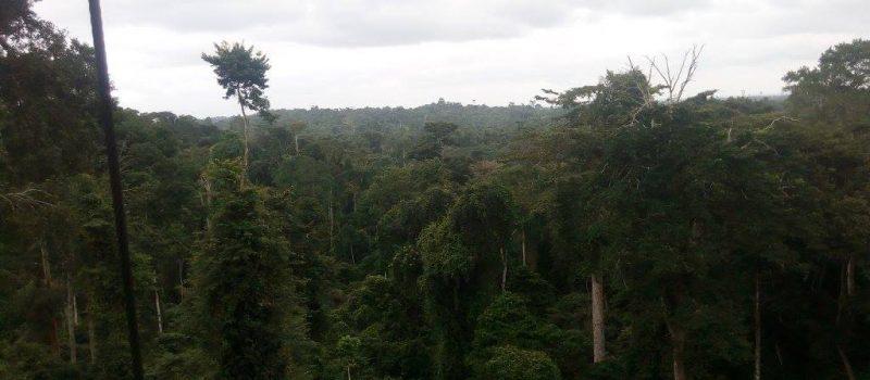 Kakum Nature Reserve